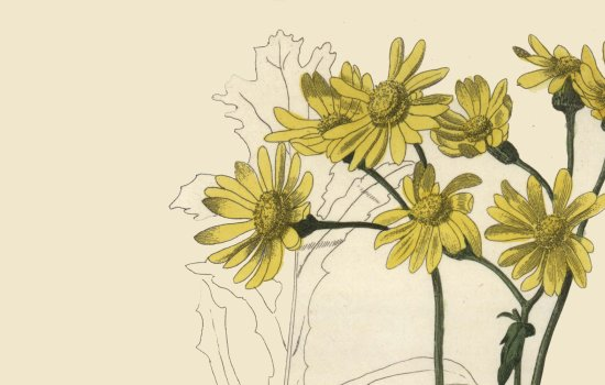 Yellow flowers against a cream background