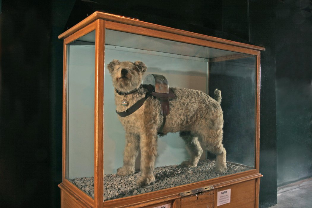 London & South Western Railway collecting dog, Laddie
